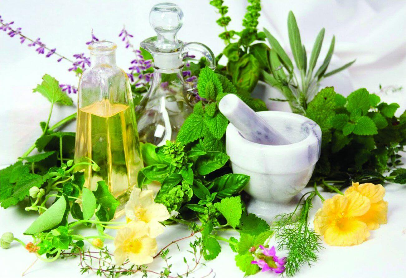 Травы при остеохондрозе позвоночника - лечение