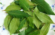 Особенности лечения лавровым листом и народные рецепты