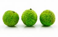 Адамово яблоко: полезные свойства, правила применения, рецепты