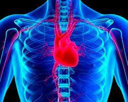 Сердце и позвоночник